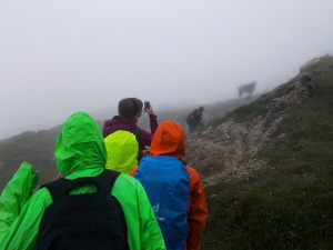 Weg zum Daumen II Kuh b